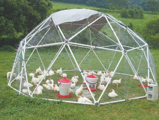 Temporary Enclosures Greenhouse : Great tips to try on your farm and they can serve double