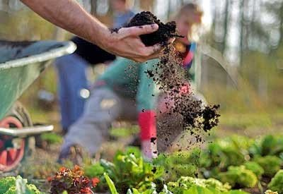 Garden Soil - Get Input from Your Agricultural / Cooperative Extension Service