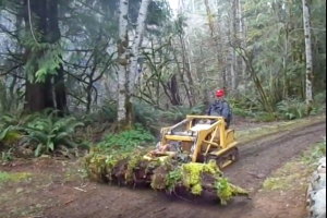 Work Smarter, Not Harder - fallen tree removal