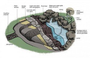 Map Out Your Filtration: backyard ponds