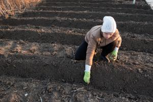 Steps to Preparing a Field for Planting with a Tractor