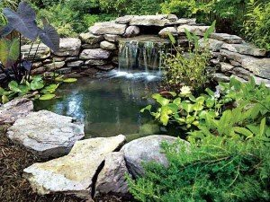backyard ponds: If Desired, Add Landscaping