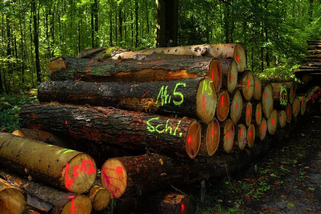 land clearing: Mark the Trees You Want to Keep