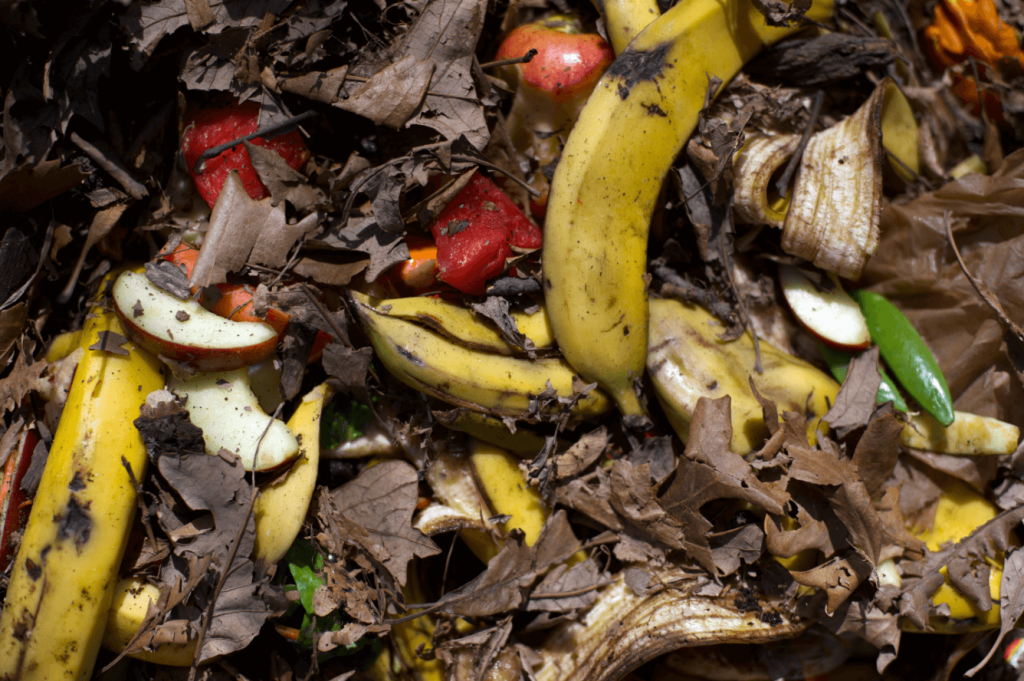 Watch for Steam and Earthworms, composting at home